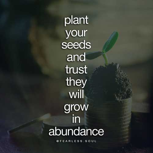 Plant your seeds